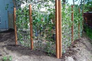 Voor en na renovatie van de tuin – Roden